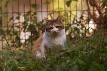 20121201子供の森猫2.JPG