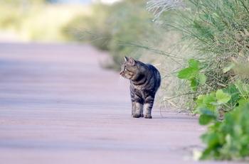 20131016相模川の猫2.JPG