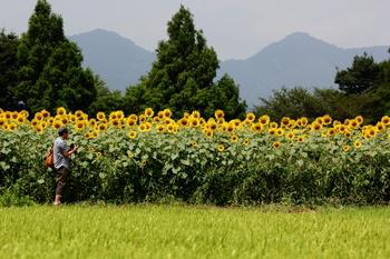 20150815向日葵畑-001.JPG
